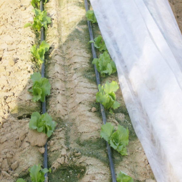 Anti-UV Agricultural PP Spunbond Nonwoven Mulch Film