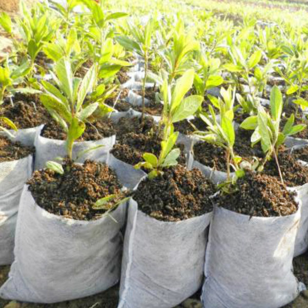 Degradable 100% pp spunbond nonwoven seedling bag
