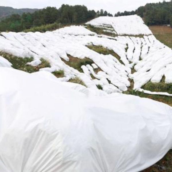 Non woven spunbond for agriculture fruit cover forest protection