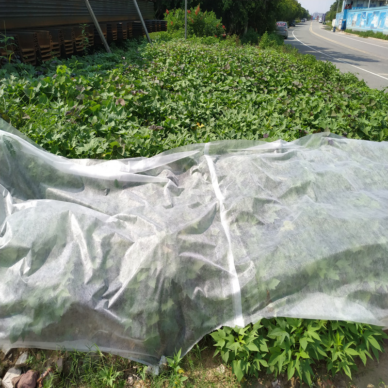 Extra Width PP Nonwoven Landcover,Lanscape