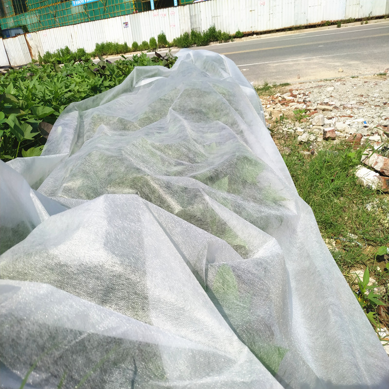 Jinchen latest spunbond nonwoven forest protection for garden-2