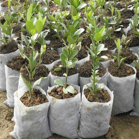 For saplings