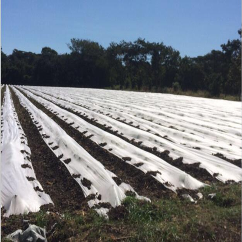 UV treated PP Nonwoven for Ground Cover