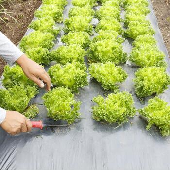 Agriculture Polypropylene Spunbond Non-Woven Weeding Cloth
