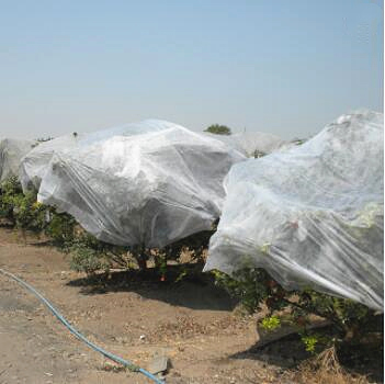 Anti-UV frost protection pp non-woven agriculture covering