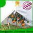 anti uv agricultural cloth fruit cover for tree