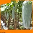 Jinchen reusable fruit tree covers suppliers for sale