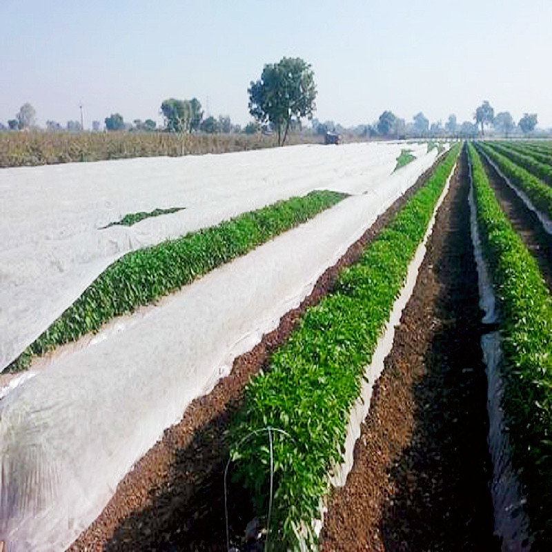PP Spunbond Nonwoven Fabric with 1% - 6% UV use in crop cover or greenhouse