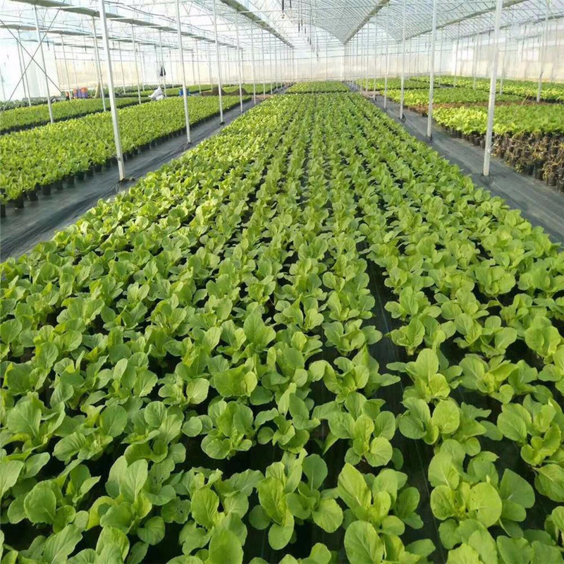 polypropylene nonwoven fabric for weed control in agriculture
