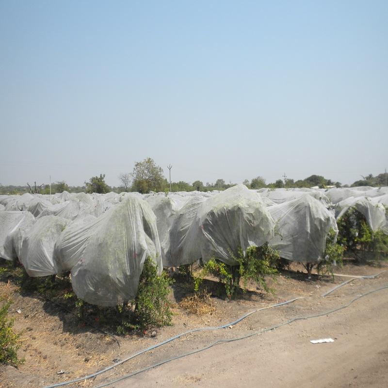 Jinchen agricultural fabric suppliers spot seller for garden-2