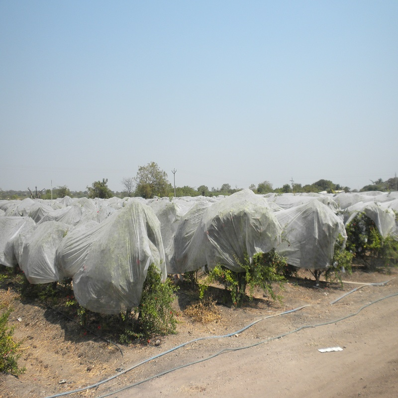 Agricultural pp nonwoven fabric anti-hail and frost