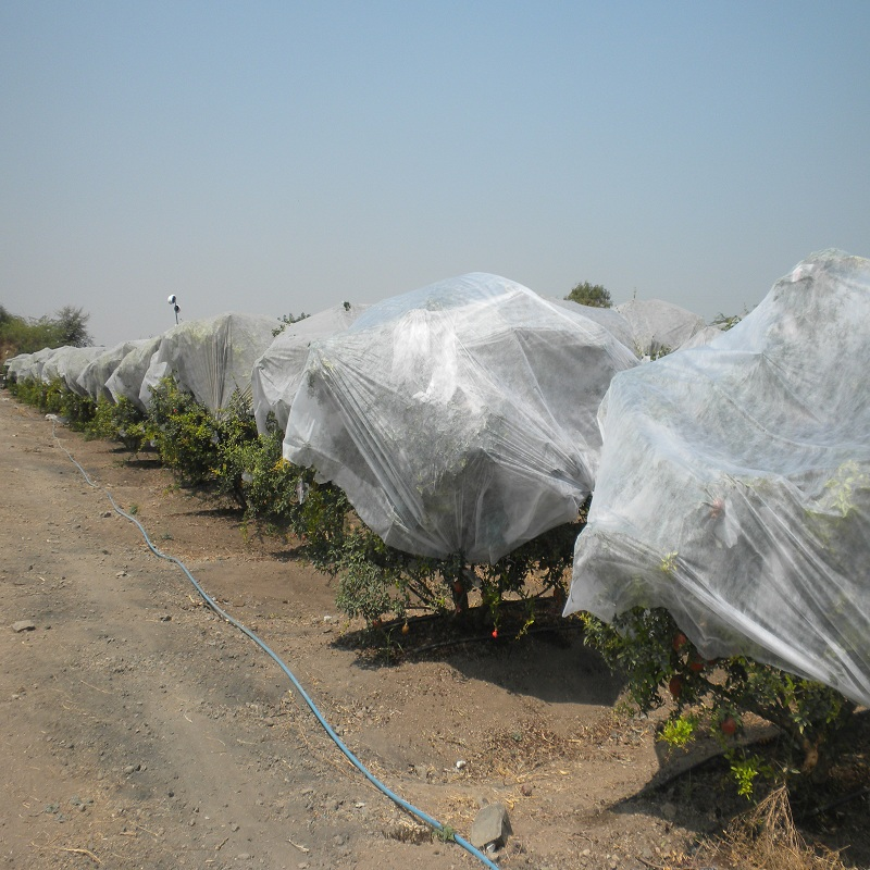wholesale agriculture non woven fabric one-stop solutions for greenhouse-2