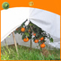 Jinchen agricultural fabric one-stop services for greenhouse