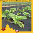Jinchen anti uv agricultural fabric affordable solutions for garden